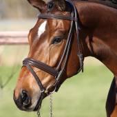 Horsea