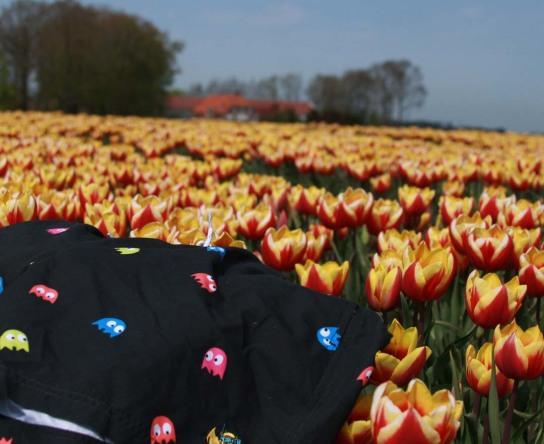 Pacman op tulpen